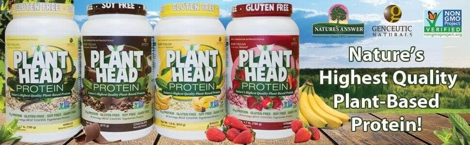 Plant Head Protein Powder Reviews